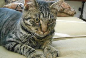 Disappearance alert Cat  Male , 5 years Luxembourg Luxembourg