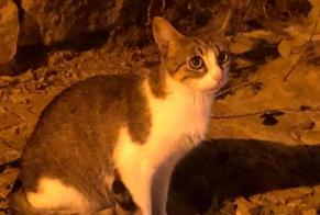 Discovery alert Cat  Unknown Reckange Luxembourg