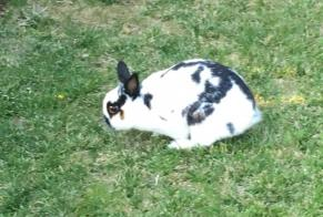Discovery alert Rabbit Unknown Dippach Luxembourg